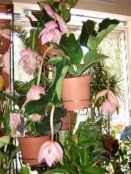 Комнатные растения и какой уход за